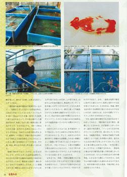 金魚伝承1